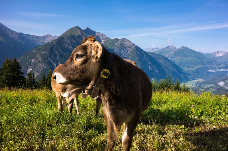 Jöchelspitze – Trailrun im Lechtal