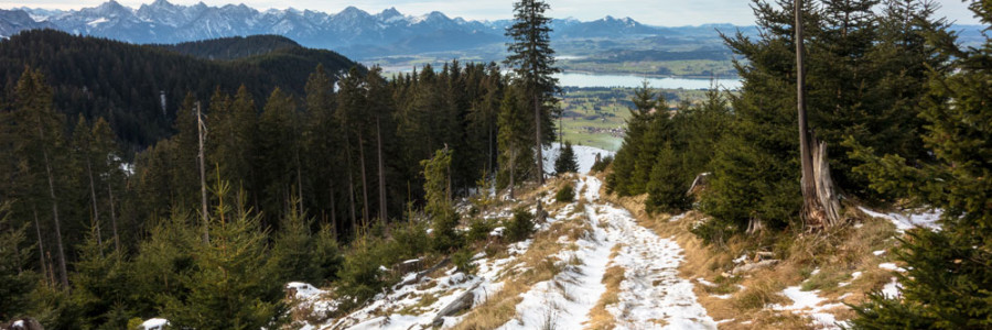 Wolfskopf - Trailrun